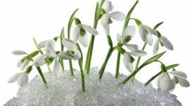 Пора растаять: топ-10 ароматов весны