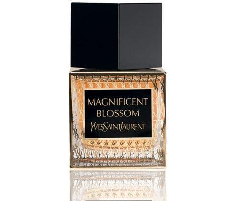 Magnificent-Blossom