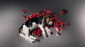 Вот где собака зарыта! Косметика и опыты на животных – в чем связь?