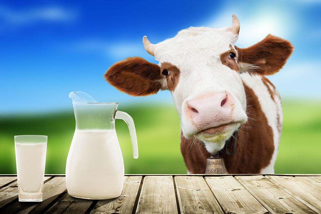 Жирные молочные и кисломолочные продукты