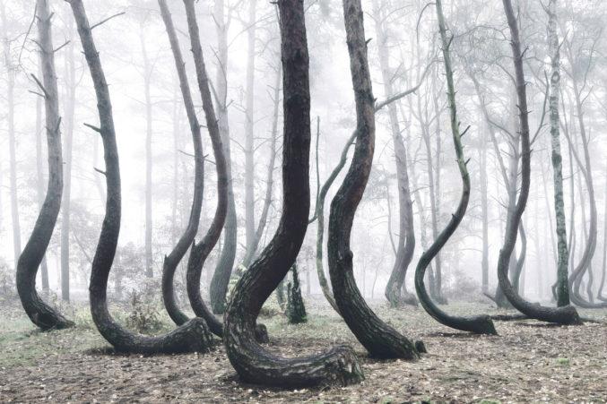 Тайны кривого леса