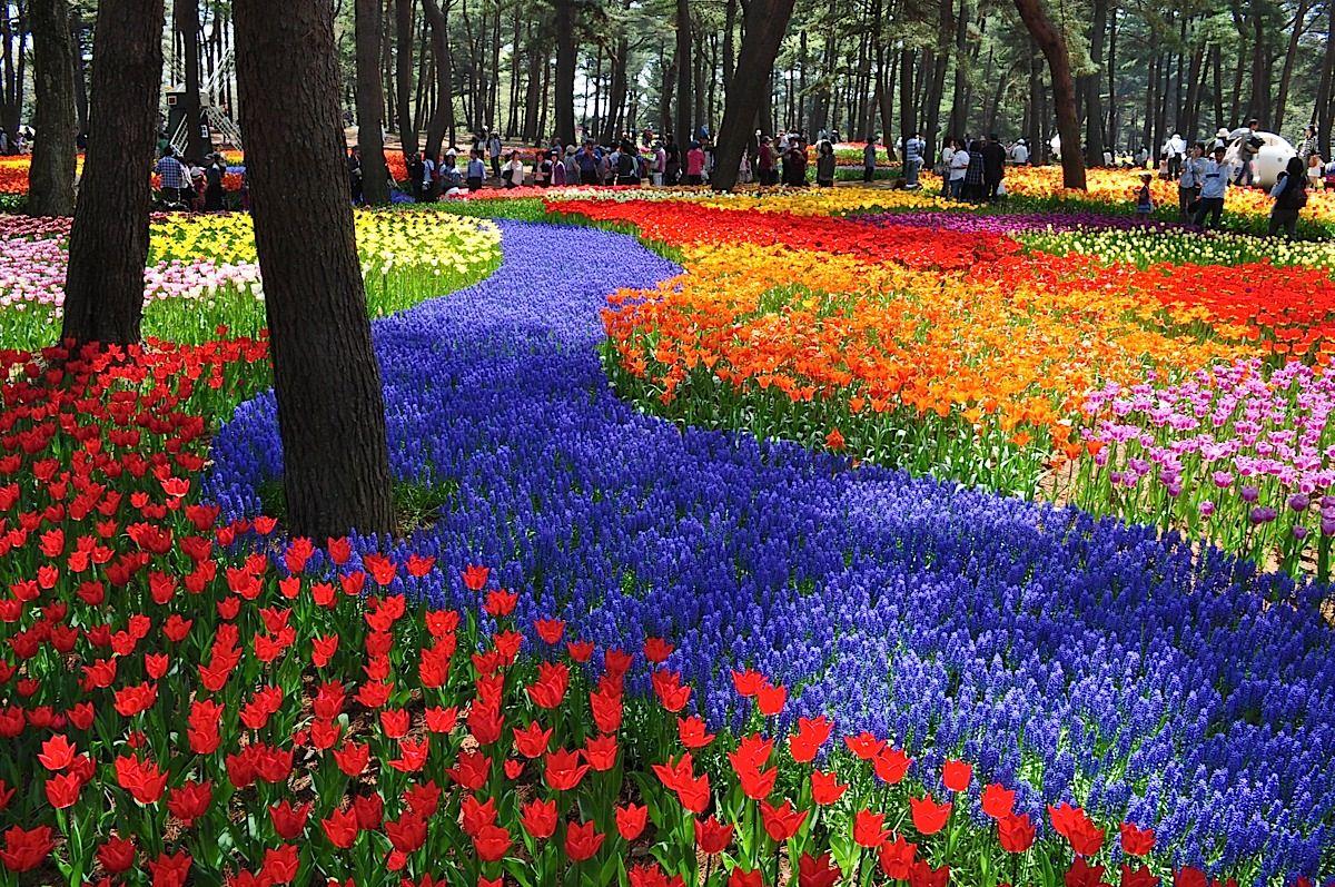 Парк «Хитачи», Япония