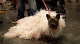 Собачья мода: что носят животные?