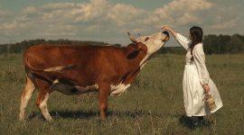 Не едим животных: альтернативные источники белка