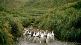 В гости… к пингвинам!